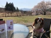 """パルムの庭が""""桜の名所""""と変わります♪"""