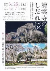 桜の開花予測☆